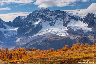 Mount MacBeth above fall larches in Monica Meadows, Purcell Range, British Columbia, Canada.