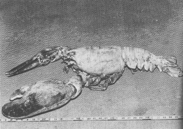 Records Book Biggest Lobster Guinness Worlds World