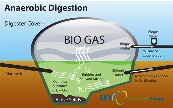 Biogas Sumber Energi Alternatif Masa Depan
