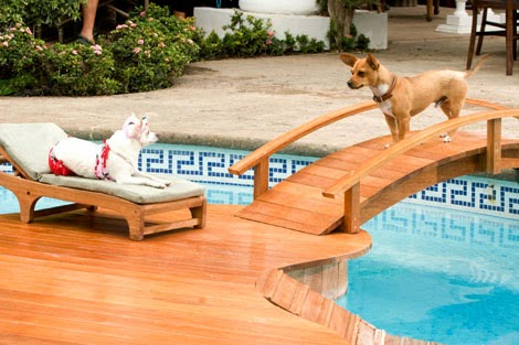 Beverly Hills Chihuahua animatedfilmreviews.filminspector.com