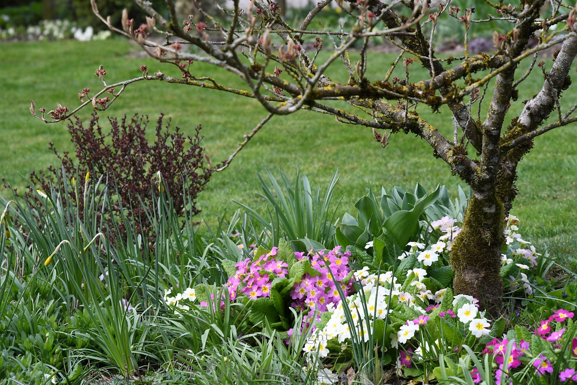 Wundervoll Welche Blumen Blühen Im März Das Beste Von Bis Hier Die Narzissen Blühen Bringen Die