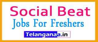 Social Beat Recruitment Jobs For Freshers Apply