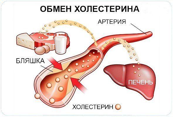 уровень холестерина 6 5