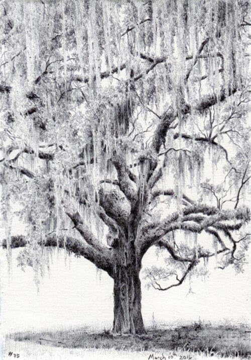 01-Dina-Brodsky-Tree-Drawings-www-designstack-co