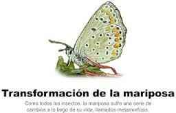 http://www.ceiploreto.es/sugerencias/varios/mariposa.swf