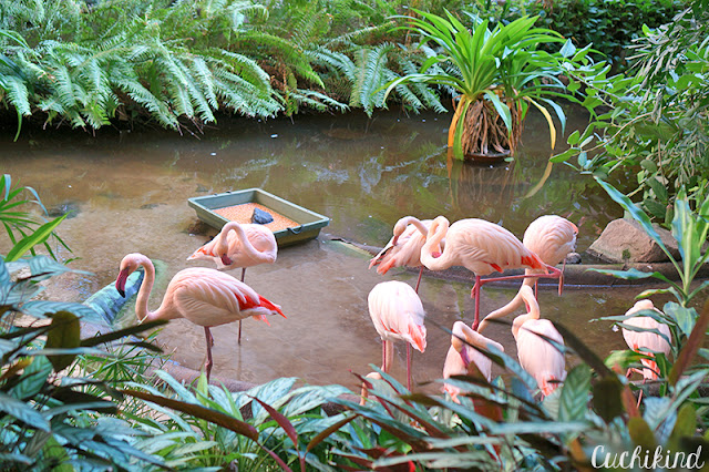 Flamingos im Tropical Islands