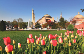 bunga-tulip-umroh-turki