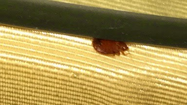 bed bugs atlanta, bed bugs couch, bedbugs atlanta,georgia bed bugs