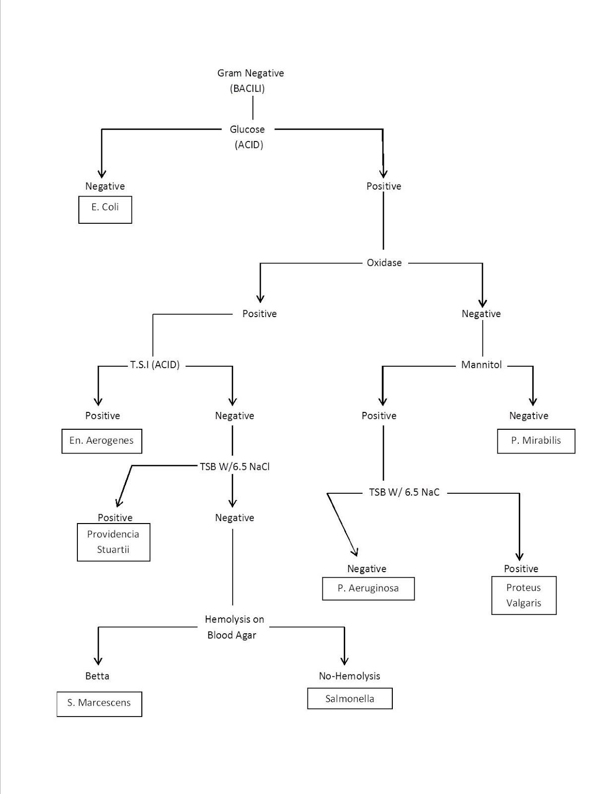 Dichotomous Key Worksheet Bacteria