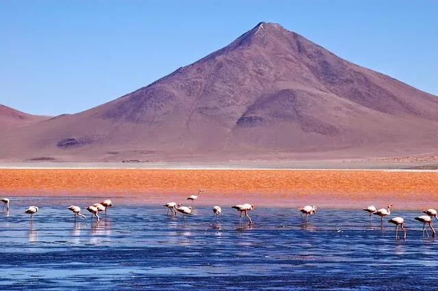 Laguna Colorada and flamingo