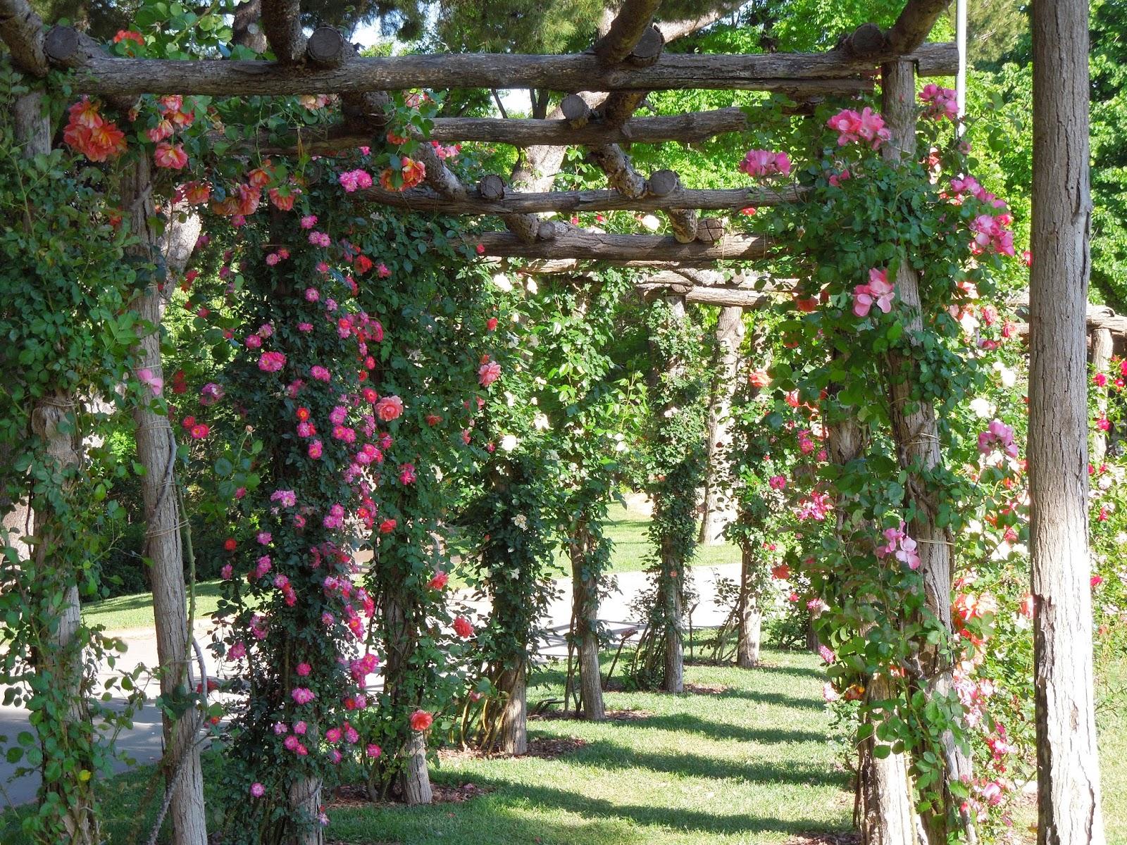 ROSAS en el Parque Cervantes - BOTÀNIC SERRAT