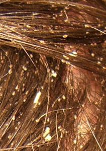 Hair Cuts Hairstyles Haircut Styles Haircut Ideas Home Haircuts