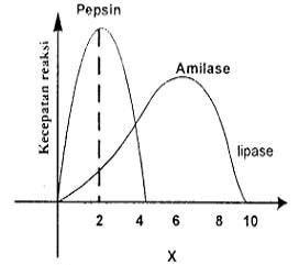 grafik enzim