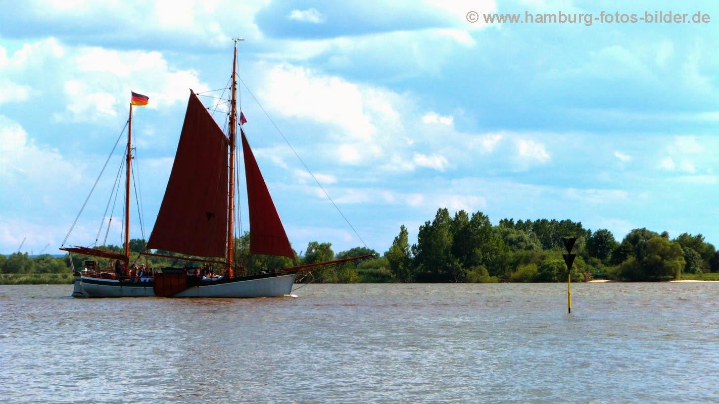 Segelboot fährt auf der Elbe vorbei an der Elbinsel Neßsand