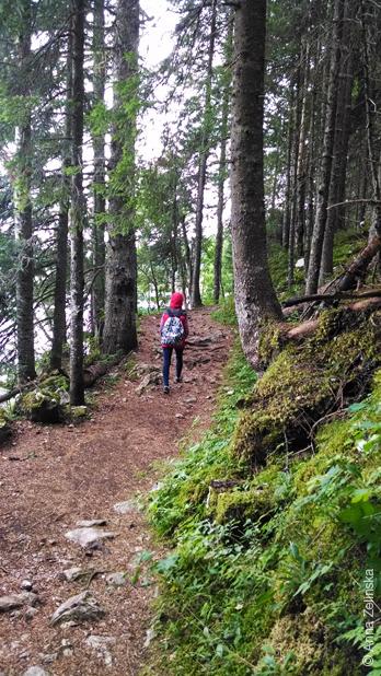 Лес около Черного озера, Дурмитор