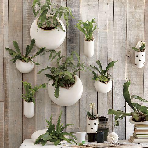 las plantas de interior antes no les hacia mucho caso y ahora me paso el da pensando formas originales para colocarlas y esta me ha gustado que os
