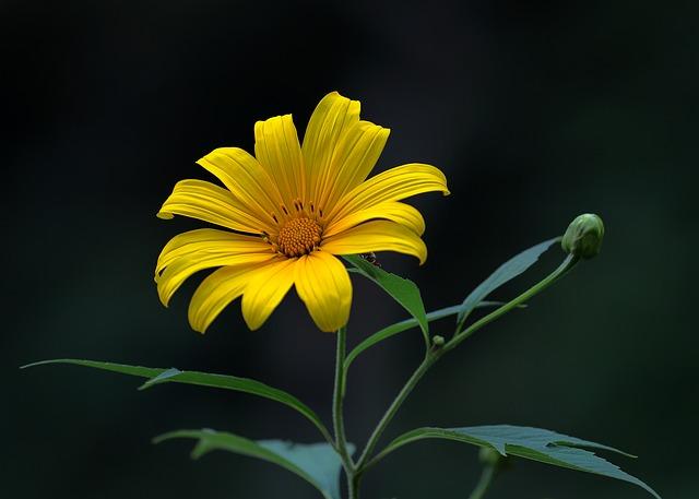 hoa dã quỳ đẹp nhất thế giới