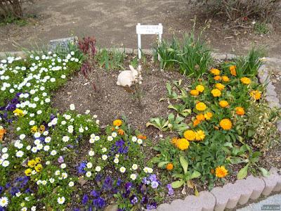 桃園公園のふれあい花壇