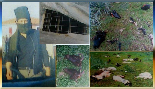 Εικόνες φρίκης γύρω από το Hotspot της Μόριας με σφαγμένα ζώα – Τι λέει ο Πρόεδρος του χωριού!