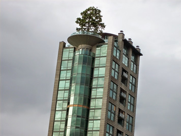 A lonely tree at the top of apartment rise building