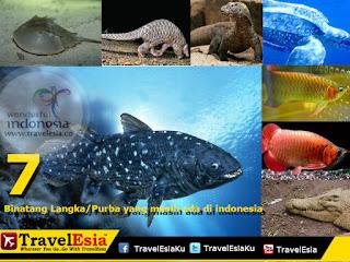 7 Binatang Langka/Purba yang masih ada di indonesia