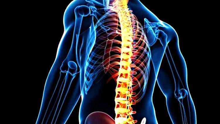 Definición de Médula Espinal, Qué es, su Significado y Concepto