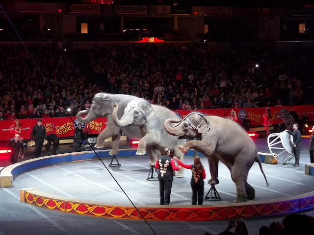 Baby Elephant at the Circus.
