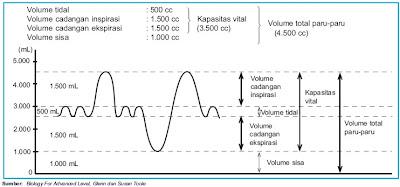 Grafik volume udara pernapasan pada manusia