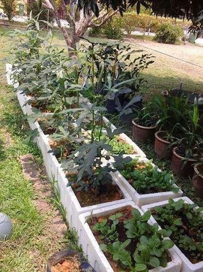 Tanam Pokok Herba, Sayuran Dalam Tong Polisterin