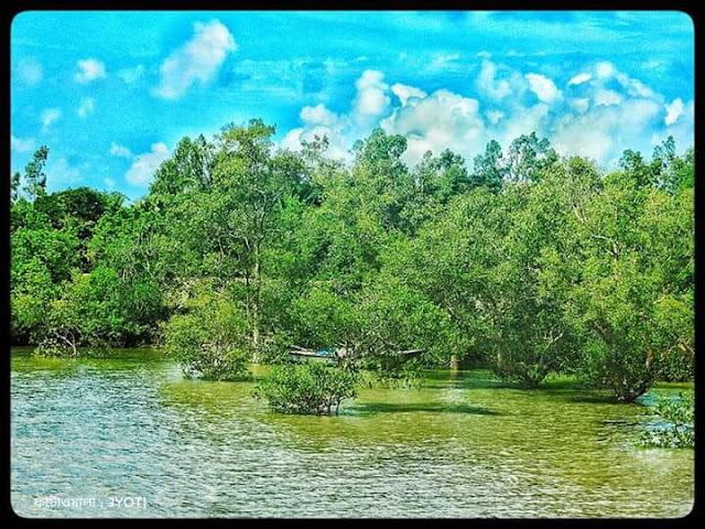 sunderbon,mangrove forest.