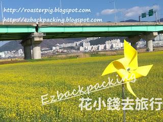 韓國油菜花景點