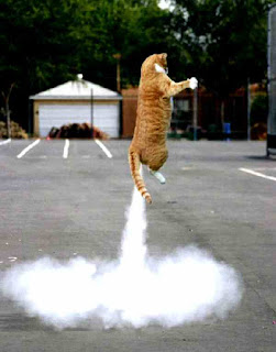 Cat blasts off