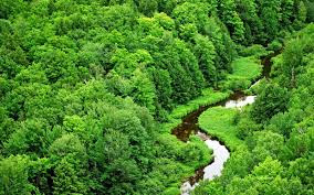 world best forest  hd wallpaper download29