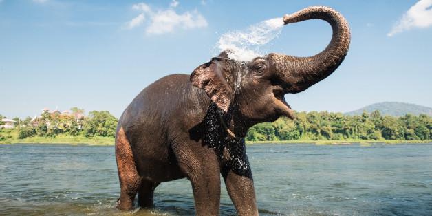 हाथी का मनोबल