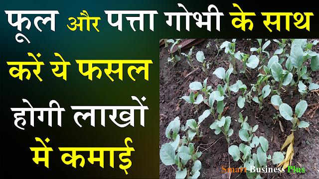 फूल गोभी और पत्ता गोभी की खेती,के साथ करें ये फसल होगी लाखों की कमाई,Smart Business Plus,फूल गोभी और पत्ता गोभी,फूलगोभी की खेती,पत्तागोभी की खेती,जुलाई और ऑगस्ट में करें ये खेती 5 महीने में होगी 20 लाख की कमाई,Jun and July farming,फुल गोभी की खेती,Smart Business Plus,varsaat me caunsi kheti Karen,varsaat me hone wali sabjiyan, jun wali sabjiyan,july wali sabjiyan,phool gobhi ki kheti,सब्जियां,phol gobhi ki kheti,cauliflower farming
