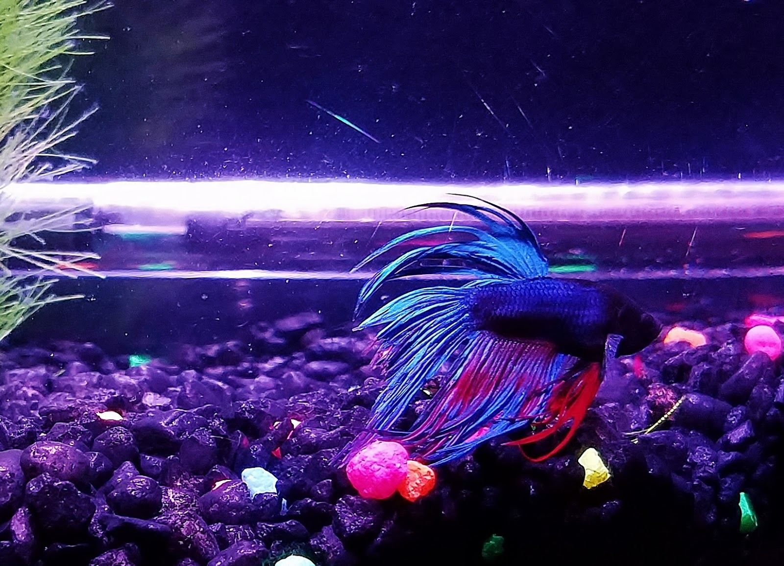 A GAMER'S WIFE: The Survival Guide to Betta Fish