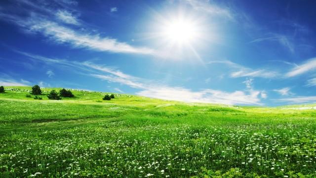 Beautiful Green Grass Wallpapers - Wallpaper hd