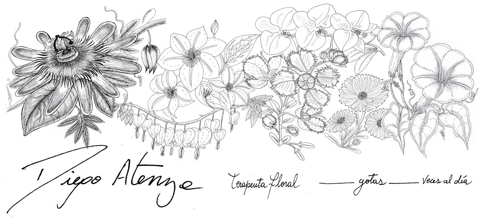 Ilustraciones Y Comics Por Supnem Diseno Etiqueta Para Flores De
