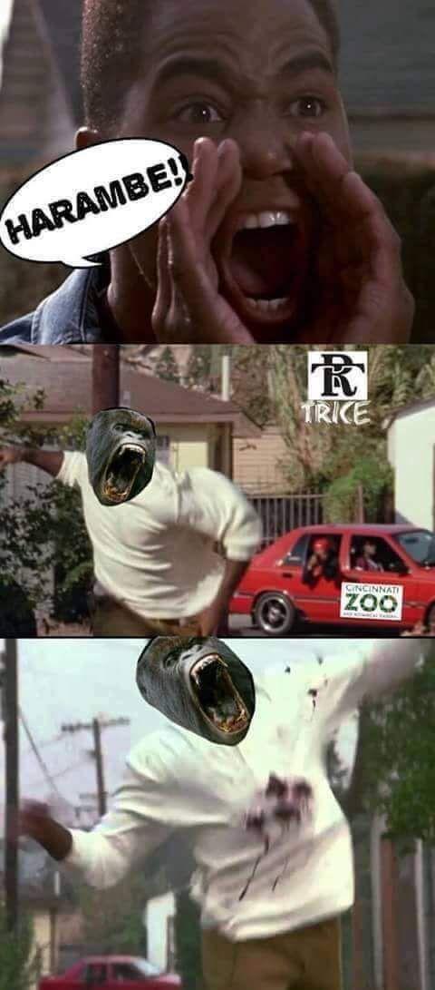 Harambe Meme 3