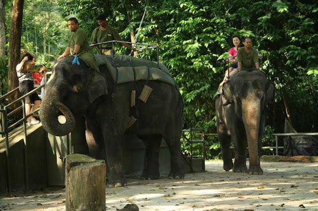 elefantes_singapur_zoo