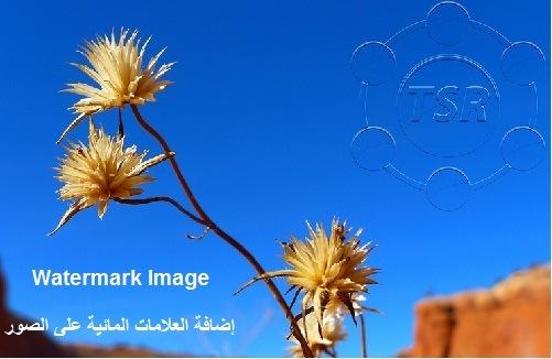 تحميل برنامج إضافة العلامات المائية على الصور TSR Watermark Image
