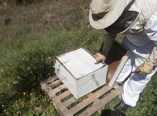 Το κηρόπανο keroTherm και η προστασία που προσφέρει στα μελίσσια