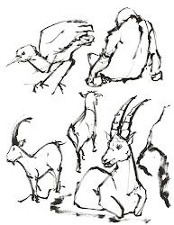 fun drawing zoo animals draw very