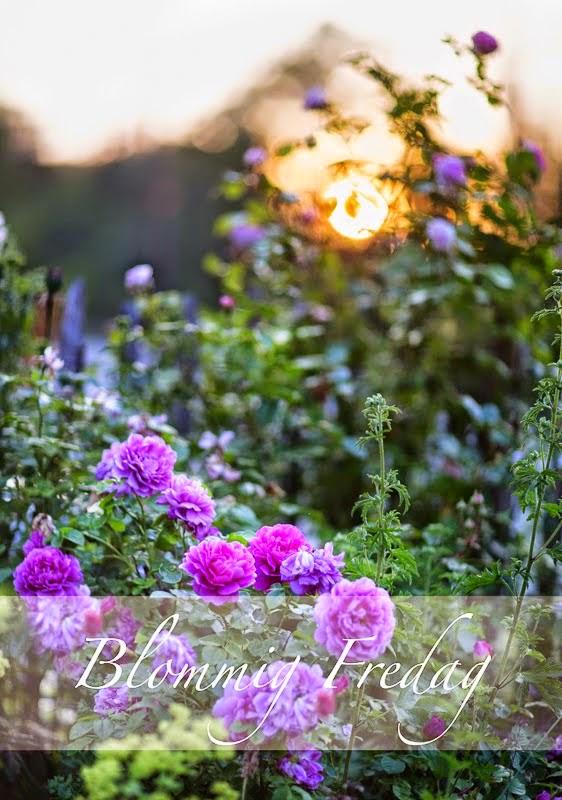 http://blandrosorochbladloss.blogspot.se/2014/11/langtan-efter-ljus.html