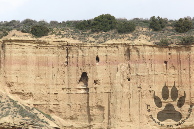 Espagne-navarre-bardenas-reales-vautours-percnopteres-aire