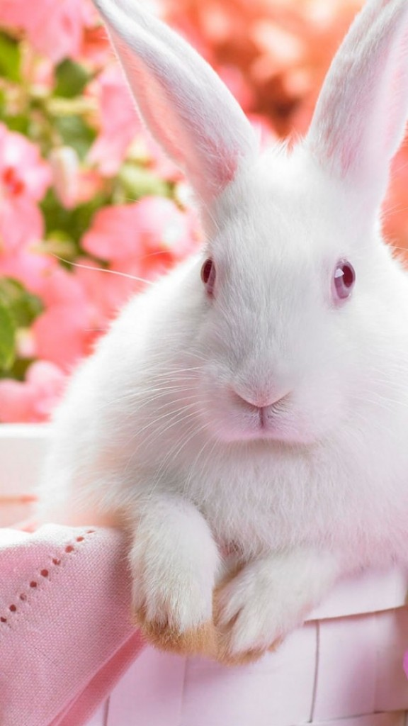 cute bunny Easter iPhone Wallpapers (1)