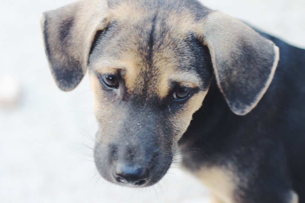 Koh Phayam: Das Leben am Pier + Straßenhunde