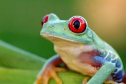 Apa Itu Hewan Amfibi? Disertai Dengan Contoh-contoh Hewan Amfibi