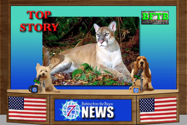 BFTB NETWoof News story on Florida Panther