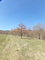Drzewo na tle niebieskiego nieba